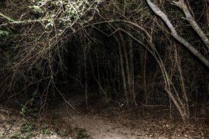 Haunted Hikes in Oglebay October 22