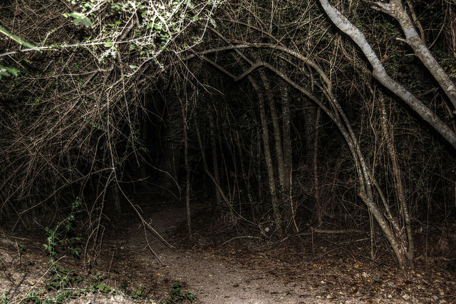 Image result for scary woods