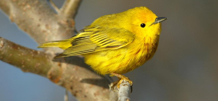 Bird Walk at the Schrader Center, Oglebay