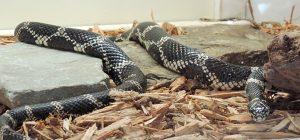 Snakes at the Schrader Center, Oglebay