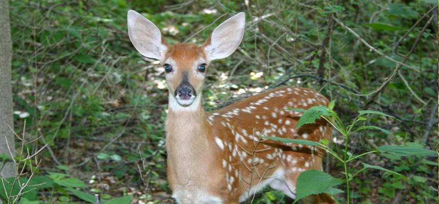Nature Hikes at the Schrader Center, Oglebay
