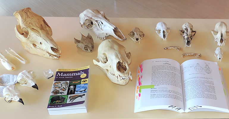 Study Skulls at the Schrader Center, Oglebay