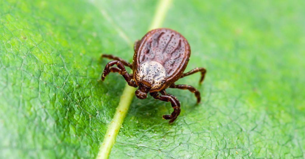 Tick & Lyme Disease Prevention - Schrader Center