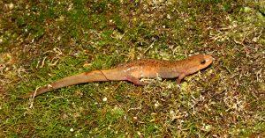 Salamander Hunt - Schrader Center