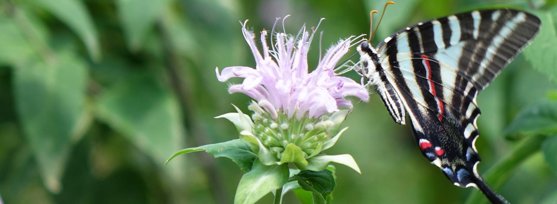 Summer Nature Programs - Schrader Center