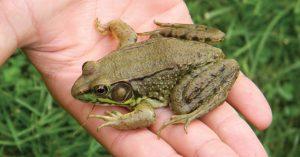 Frog Study Schrader Center